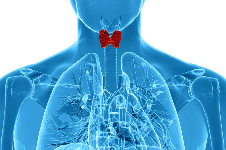 Desmontamos mitos de la glándula tiroidea